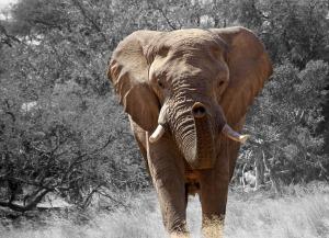 elephant-84186_1280